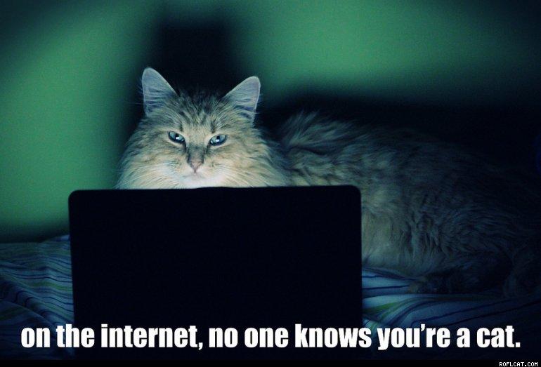 Populiariausios internetuose yra katės. Jei įdėsite nuotrauką su kate, straipsnis bus dvigubai populiaresnis.
