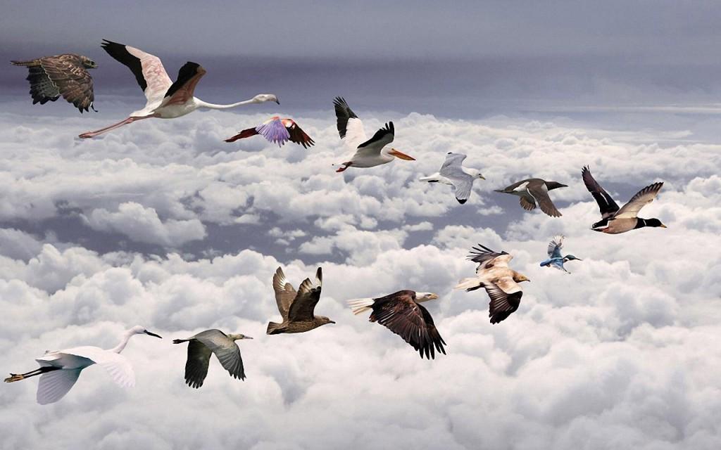 Skrenda paukščiai, blogeriai ir tinklaraštininkai